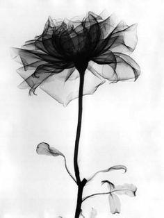 Ảnh động về hoa hồng đẹp lung linh - Phần 2 - Blog hoa đẹp