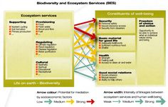 Biodiversity and ecosystem services - Bloom or Bust Report. UNEP FI • Biodiversity and Ecosystem Services • A Financial Sector Briefing
