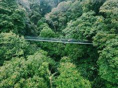 Tamam Nasional Gunung Gede, Bogor - Jawa Barat Indonesia