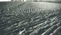 Paul Nash, Ploughed Field and Haystacks, 1937