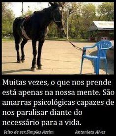 Muitas vezes, o que nos prende está apenas na nossa mente. São amarras psicológicas capazes de nos paralisar diante do necessário para a vida. Antonieta Alves