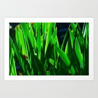 Long leaves Art Print by msalazar Leaf Art, Herbs, Leaves, Art Prints, Nature, Design, Art Impressions, Naturaleza