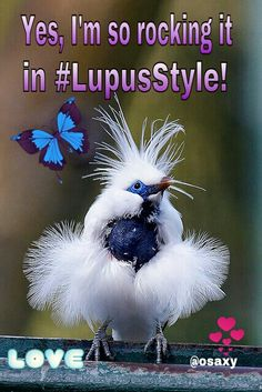 #lupusstyle