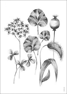 Grow grå - Illustration - Djur & natur - TAVLOR & POSTERS