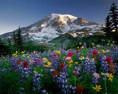 paisajes de flores