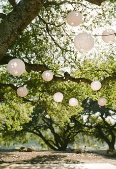 White paper lanterns in trees at the reception // Viera Photographics