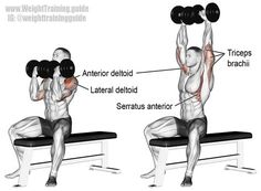 Arnold press. A compound push exercise, invented by Arnold Schwarzenneger. Main muscles worked: Anterior Deltoid, Lateral Deltoid, Supraspinatus, Triceps Brachii, Middle and Lower Trapezii, and Serratus Anterior. Visit site to learn how to perform this exercise properly, as most people get it wrong.