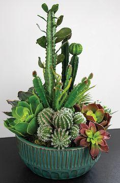 Mini Cactus Garden, Cactus House Plants, Succulent Gardening, Succulent Pots, Cacti And Succulents, Planting Succulents, Planting Flowers, Garden Plants, Growing Gardens