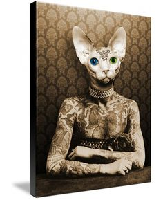 Image result for old cat lady sphynx