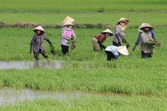 arrozais - Google Search