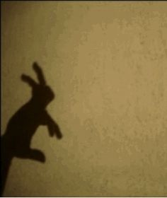 wildheartwhispers #rabbit #shadow