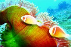 Under the sea in Okinawa