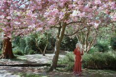 new blog post: http://alicewonderland2.blogspot.co.uk/2016/02/my-quirky-yummy-ballerina-art-tuesdays.html #cherryblossomgirl #cherryblossoms #selfportrait by me #alicesolantaniasaga