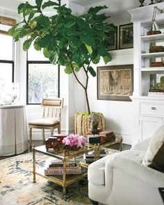 plant, interior, coffee tables, living rooms, rug, living room art, leaf fig, baskets, indoor trees