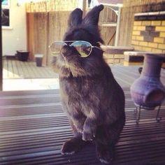 Как бы ты ни старался, ты никогда не будешь выглядеть так же круто, как этот кролик pic.twitter.com/pi4XeWsFiL