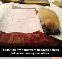 A new excuse and obviously very valid. We all know we should not wake the adorable little duckling.