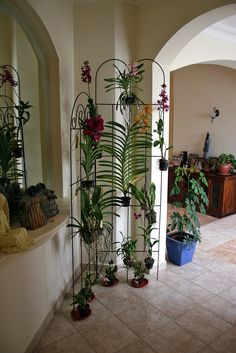 Orchid Wall - 3   The orchid wall is complete.   Mahmood Al-Yousif   Flickr