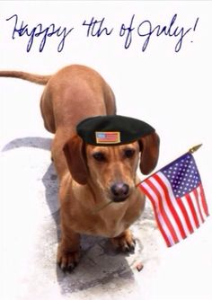 4th of july dog memes