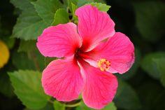 Hawaiian Flowers | Tropical flowers