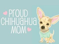 I love my little Chihuahuas ♥