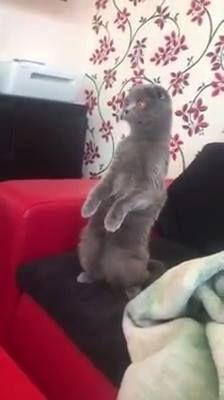 'My cat's reaction to popcorn noises...'