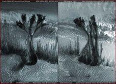 Mars Dunes, Trees & Technology