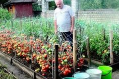 99 Unusual Vegetable Garden Ideas For Home Backyard - New ideas Garden Beds, Garden Paths, Garden Landscaping, Vegetable Garden For Beginners, Gardening For Beginners, Vegetable Gardening, Summer House Garden, Home And Garden, Landscape Design