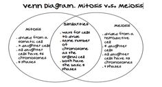 Mitosis vs meiosis table summary biology pinterest genetics mitosis vs meiosis venn diagram comparing and contrasting mitosis and meiosis ccuart Choice Image