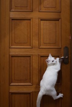 #cats are so clever.