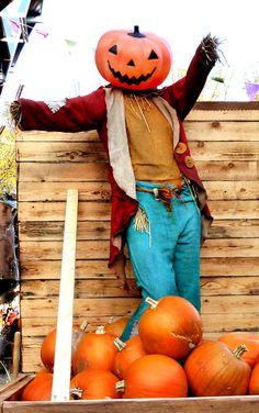 Harvest home decor kentville pumpkin