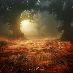 Gorgeous fall forest photo