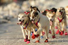 Iditarod 2015 ceremonial start | Alaska Dispatch News