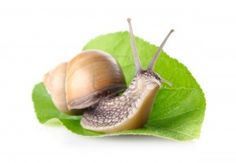 Snail Mucin/ Snail Slime - reduces scars, removes damaged cells and imperfections