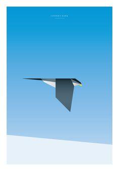 Cooper's Hawk - Tony Buckland