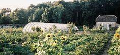 La permaculture peut-elle nourrir les Français ? : http://www.efficycle.fr/la-permaculture-peut-elle-nourrir-les-francais/