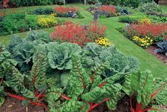 Your Yard! How to Design an Edible Landscape - Natural Landscaping - Natural Home & Garden Convert a resource-guzzling lawn into a lovely, money-saving edible landscape.Convert a resource-guzzling lawn into a lovely, money-saving edible landscape. Natural Landscaping, Backyard Landscaping, Landscaping Ideas, Landscaping Software, Edible Plants, Edible Garden, Potager Bio, Beautiful Flowers Garden, Garden Landscape Design