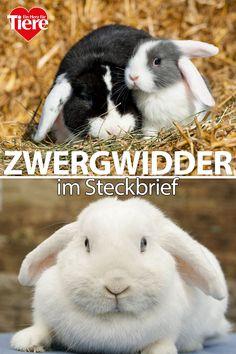 Rabbit, Mini, Animals, Bebe, Pets, Pet Dogs, House Rabbit, Rabbit Breeds, Pet Bunny Rabbits