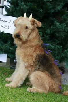Airedale terrier in disguise as The gruffalo