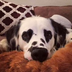 Cute Overload: Internet`s best cute dogs and cute cats are here. Aww pics and adorable animals. Cute Puppies, Cute Dogs, Dogs And Puppies, Cute Babies, Doggies, Cute Little Animals, Cute Funny Animals, Funny Cats, Fun Funny