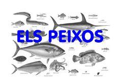 Projecte Els peixos P-4