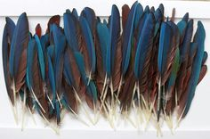 Macaw Wing & Tail Feathers HUGE 100 pc. LOT Headdress Peyote @meow126