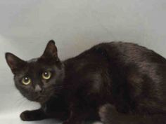 Help us Save NYC AC&C Shelter Cats. **SENIOR-10 YRS**