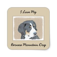 #Bernese Mountain Dog Puppy Square Sticker - #bernese #mountain #dog #puppy #dog #dogs #pet #pets #cute #bernesemountaindog