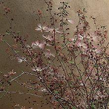 Plant Details | Arizona Municipal Water Users Association