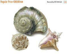 Antique Sea Shell Collection. Large Cameo by LeBonheurDuJour