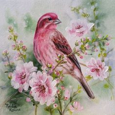 """Daily Paintworks - """"Softly Comes the Springtime"""" - Original Fine Art for Sale - © Paulie Rollins Watercolor Bird, Watercolor Paintings, Ouvrages D'art, Bird Artwork, Bird Drawings, Bird Pictures, Fine Art Gallery, Bird Prints, Beautiful Birds"""