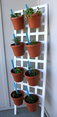 Turn a bit of lattice and some plastic pots into a vertical herb garden!