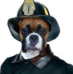 Boxer.  Okay, just call me Officer Wiggly Butt.