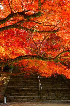 Fukuoka, Japan Red Leaves, Autumn Leaves, Japan Tourism, Beautiful Places, Beautiful Pictures, Fukuoka Japan, Autumn Painting, Visit Japan, Japanese Architecture