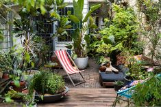 / Life: David Whitworth David Whitworth's colourful inner-city courtyard / Image by Daniel Shipp. Small garden design with containersDavid Whitworth's colourful inner-city courtyard / Image by Daniel Shipp. Small garden design with containers Small City Garden, Small Courtyard Gardens, Small Garden Design, Garden Spaces, Small Gardens, Balcony Gardening, Small Jungle Garden Ideas, Bird Bath Garden, Garden Cottage